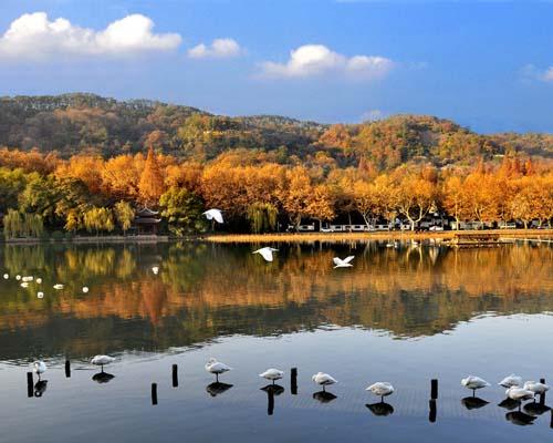 杭州西湖+西溪湿地一日游【精品纯玩B线】